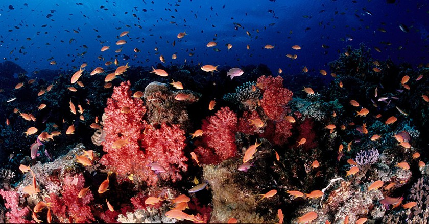Soft coral, Fiji | © Tony Shih / Flickr