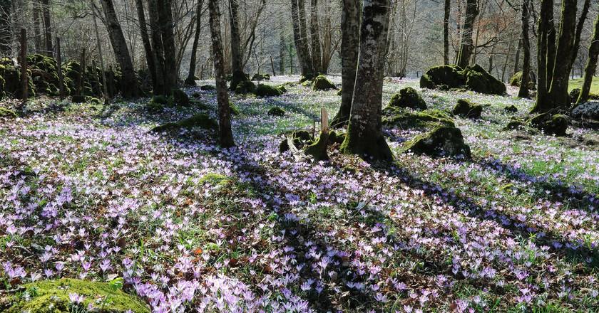 Slovenia's Nature│© Lorenzo Magnis/Flickr