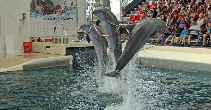 Dolphinarium in Varna   © pompi/Pixabay