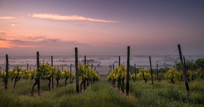 Vineyard   © Pexels/pixabay