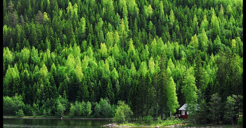 Forest   © Staffan Ekstrand/Flickr