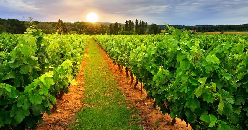 The vineyards around St Tropez are staggeringly beautiful   © Oleg Znamenskiy