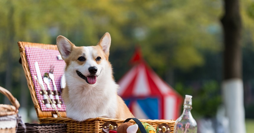 A dog at a picnic | ©  Chendongshan/Shutterstock