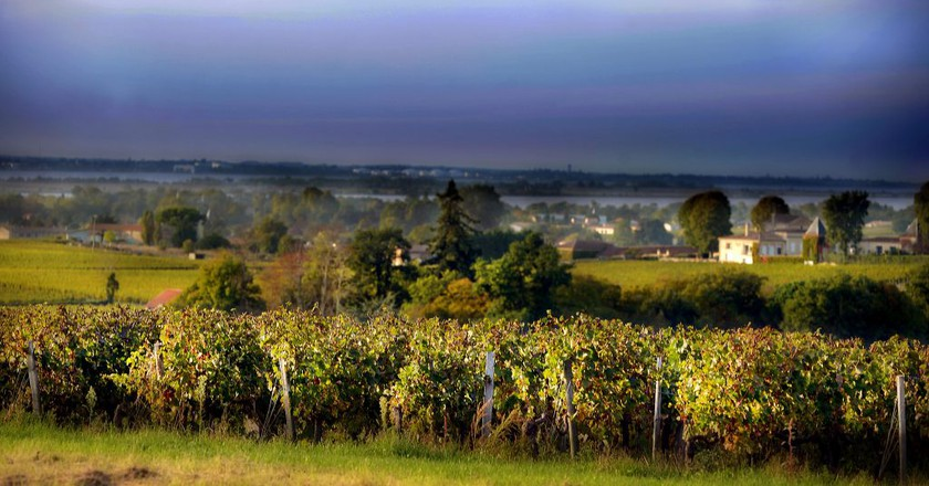 Vineyard, Bordeaux | © Blaye Côtes de Bordeaux/Flickr