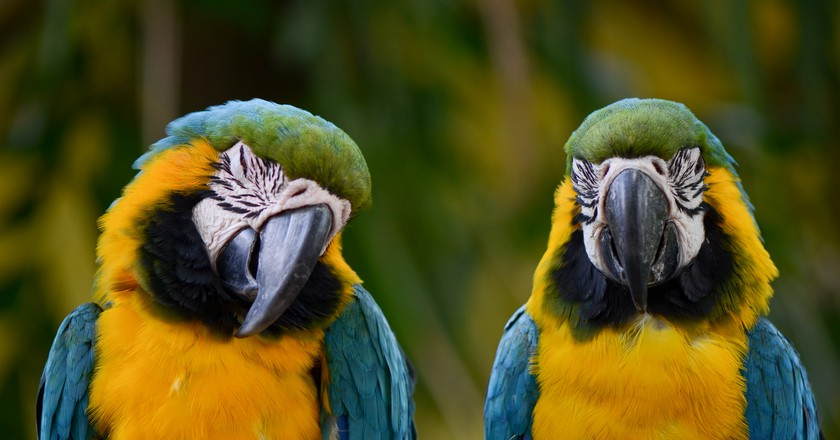 Colombian Macaws | © Holley And Chris Melton / Flickr