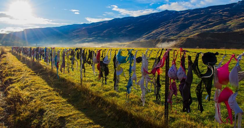 Cardrona Bra Fence, New Zealand   © Daniel Fernandes de Oliveira/Flickr