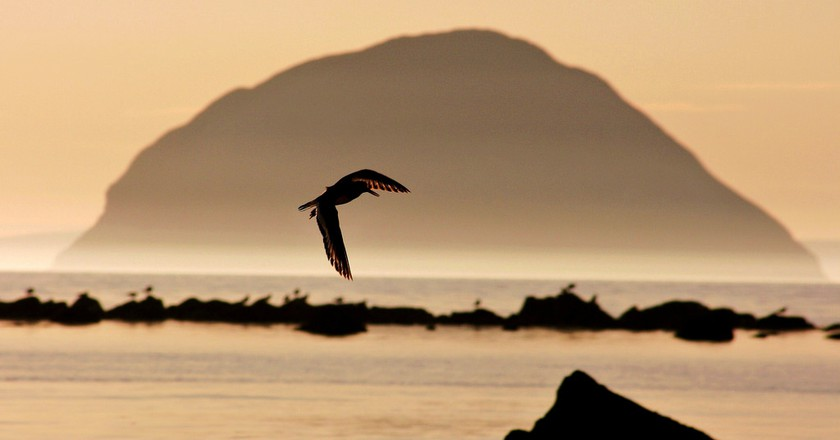 Oystercatcher in Front of Aisla Craig | © Andy Muir/Flickr