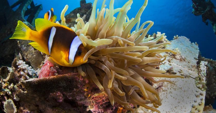 Sea life in Aqaba  | Shutterstock