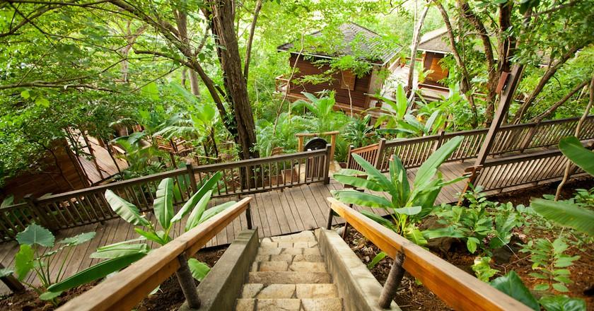 Tree house vacation   © Courtesy of Aqua Wellness Resort
