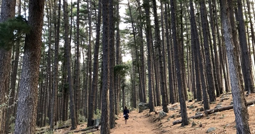 Tranquil walks in Newlands Forest | © Andrew Thompson