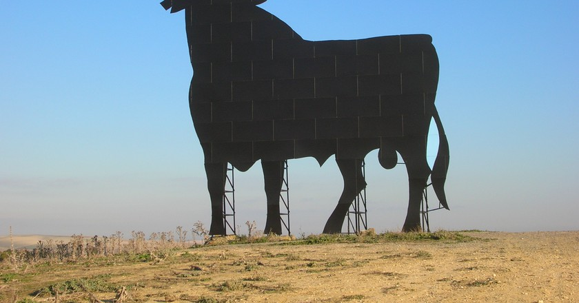 Osborne bull    © grez/WikiCommons