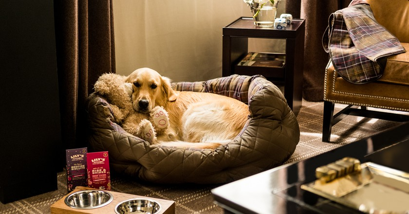 Rosewood London's resident labrador Pearl | Courtesy of Rosewood London