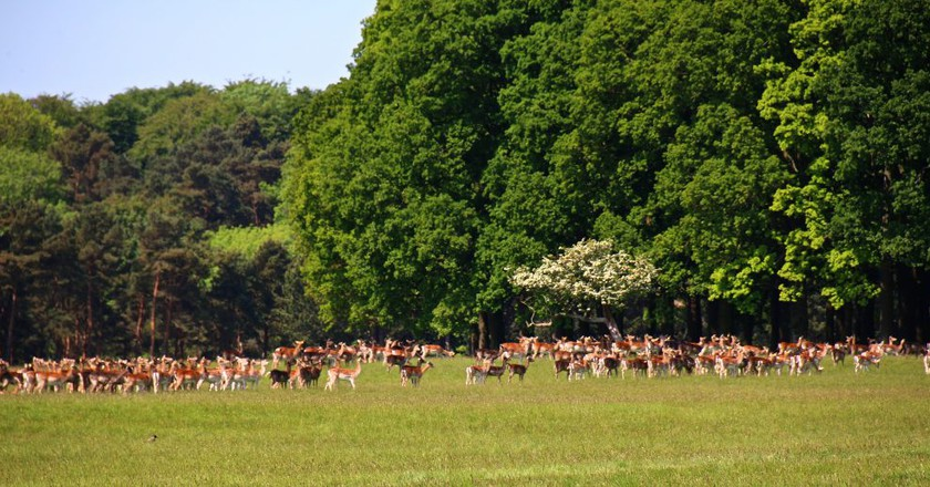 Deer in Phoenix Park| Alain Rouillier/ ©Flickr