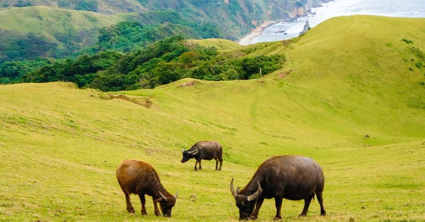 Animals grazing in Batanes | © Camz Co/Flickr