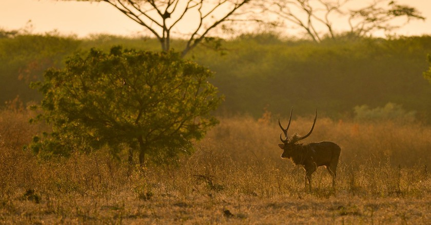 Wild deer at Baluran National Park | © johan.wildlife/Flickr