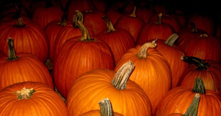 Pumpkins | © CJ Sorg / Flickr