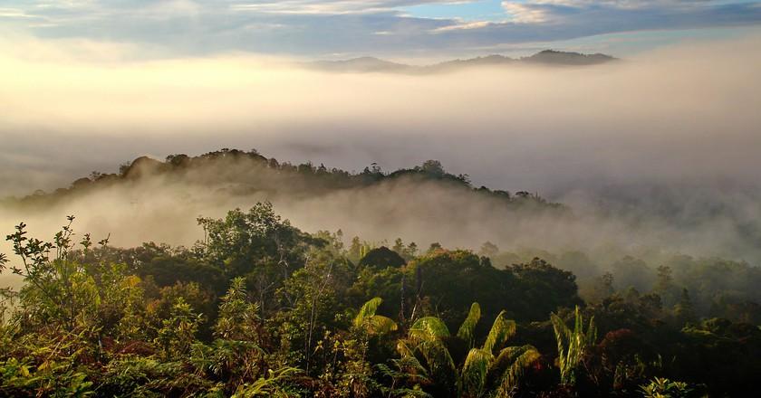 Worth protecting? Borneo's rainforest   © labanglonghouse/ Pixabay