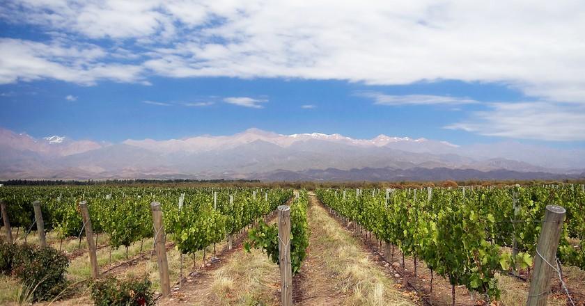 Vineyards in the Uco Valley, Argentina | © David/Flickr