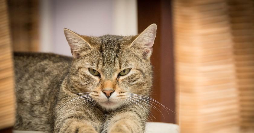 Cat | © Gerhard Bögner/Pixabay