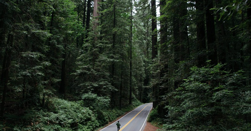 A Photographer's Guide to Capturing California's Giant Redwoods