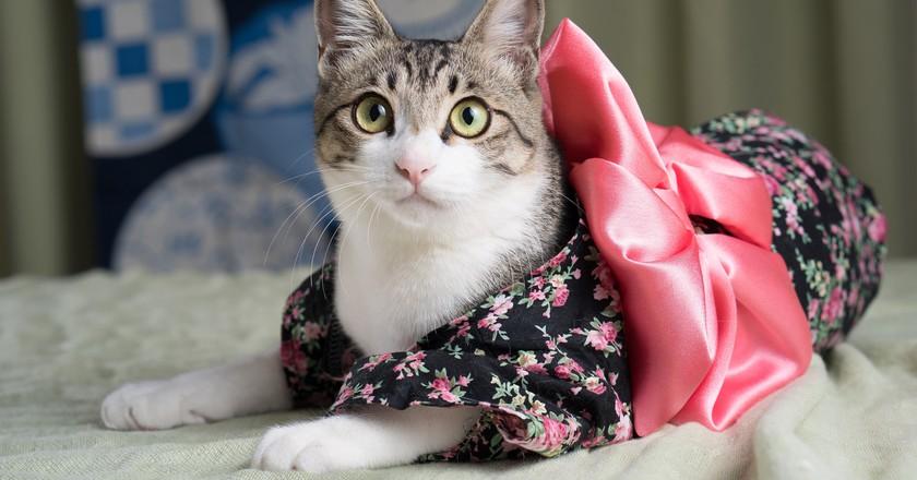 Kimono Kitty | © Big Ben in Japan/ Flickr