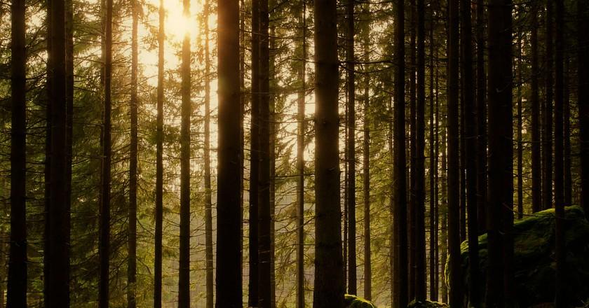"<a href = ""https://flic.kr/p/cGQwMo""> The lure of Sweden's nature | ©Daniel Sjöström/Flickr"