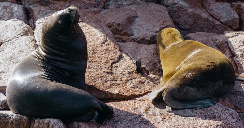 There are plenty of sea lions to be seen in Paracas