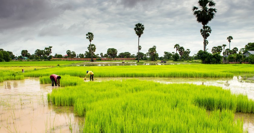 Cambodia is alive with colour during wet season | © Pablo Rogat/ Shutterstock