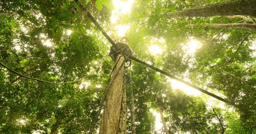 The Ultimate Guide to Taman Negara Rainforest