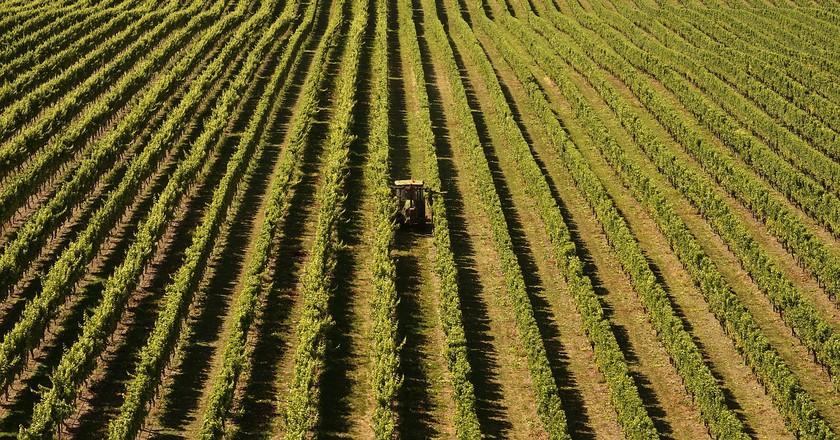 Vineyards   © Barni1/Pixabay