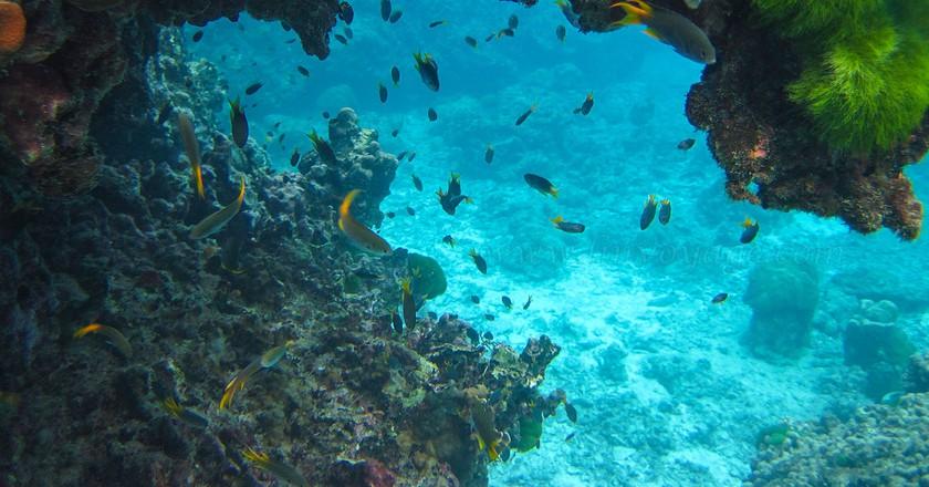 Andaman sea marine life   © Phuket@photographer.net / Flickr