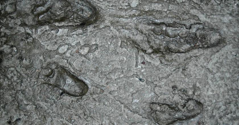 Australopithecus afarensis fossil hominid footprints   © James St. John / Flickr