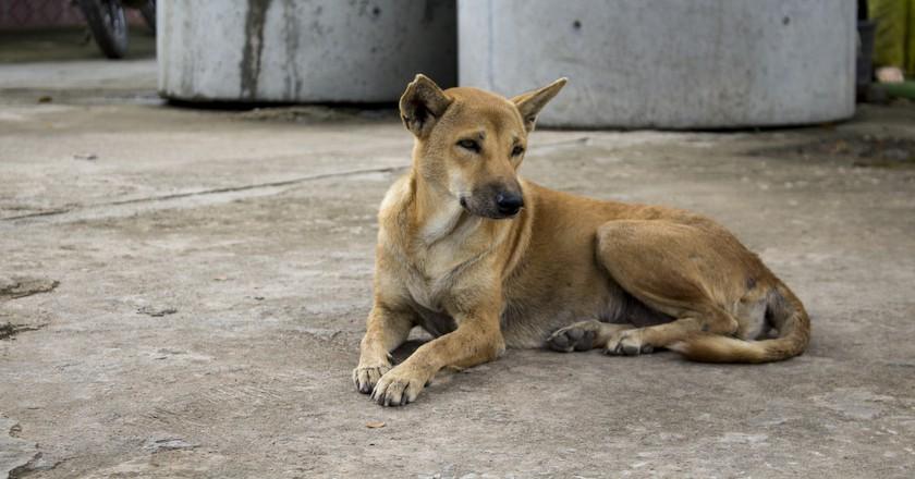 A local street dog | © Edahn Small/Flickr