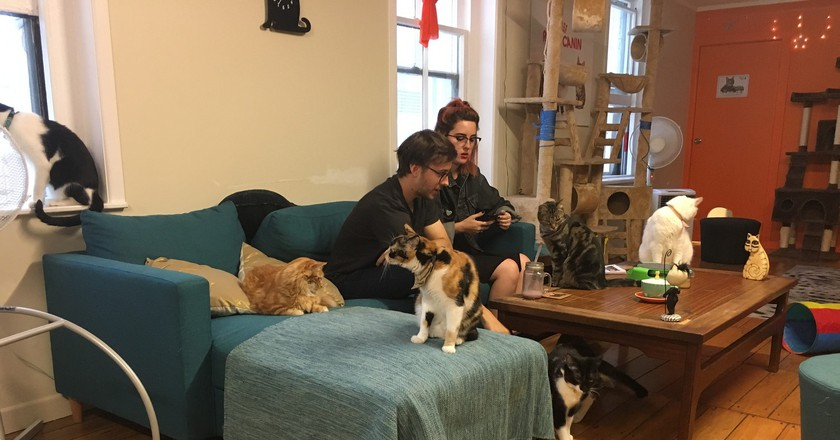 Cat cafe in Auckland   © profernity/Flickr
