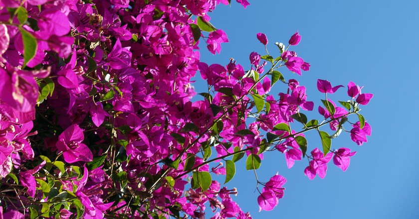 Brisbane in Spring | ©AdaMacey/Flickr