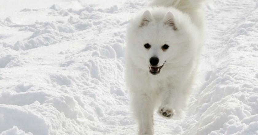 Winter in Sweden includes dog sledding | © Hanna Gustafsson / Flickr