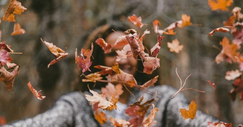 Autumn leaves | © Jakob Owens / Unsplash