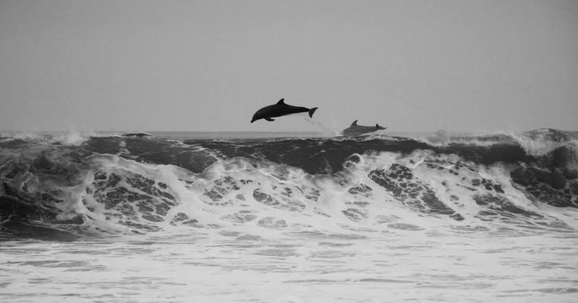 Dolphins jumping | © Jeremy Ricketts / Unsplash