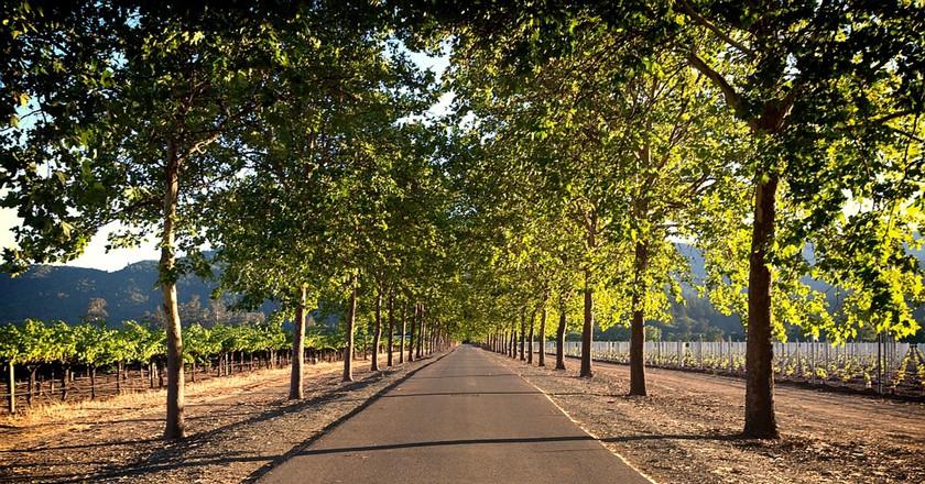 Sign up for the Napa to Sonoma Half Marathon to run past Napa's scenic vineyards | © 12019/Pixabay