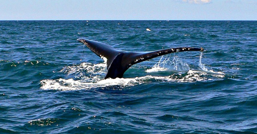 Bay of Fundy   © Jimfbleak/WikiCommons