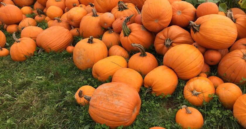 Pumpkins | © geraldford / Flickr