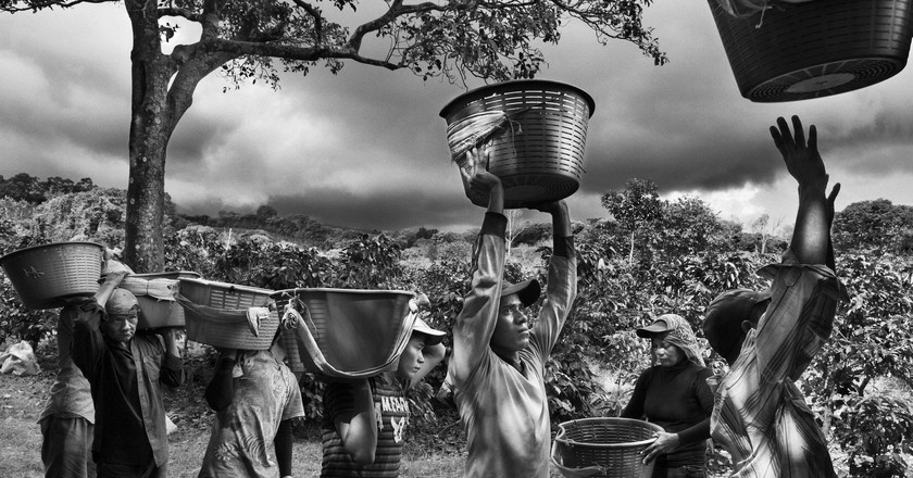 Coffee pickers. Finca La Hilda on the slopes of Poás Volcano, San José region, Costa Rica (2013) | © Sebastião Salgado/Amazonas images. Reproduction courtesy of 'Parfum de Rêve'/'Scent of a Dream'