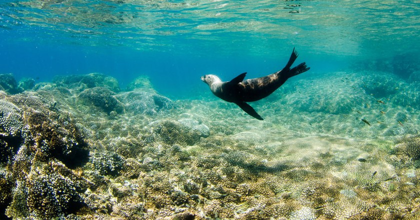 Californian sea lion off the coast of Isla Espíritu Santo, Baja California Sur | © Leonardo Gonzalez / Shutterstock