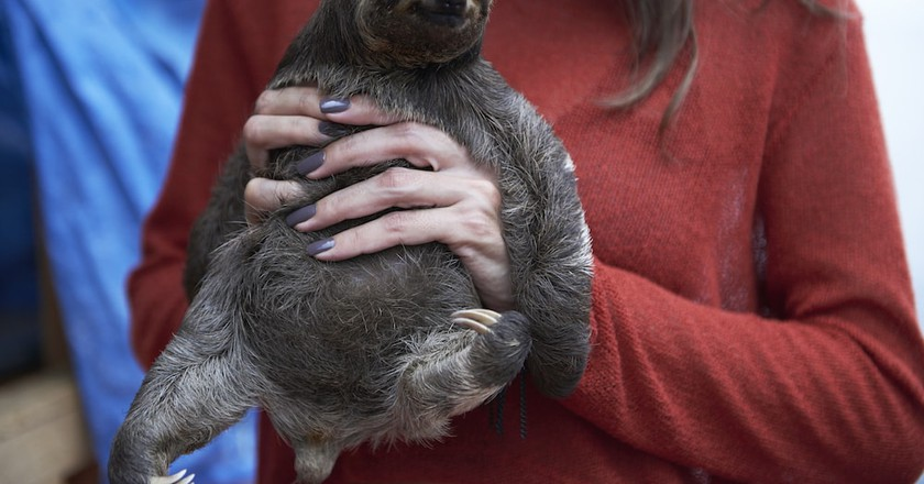 A tourist poses with a wild sloth | © World Animal Protection Organization