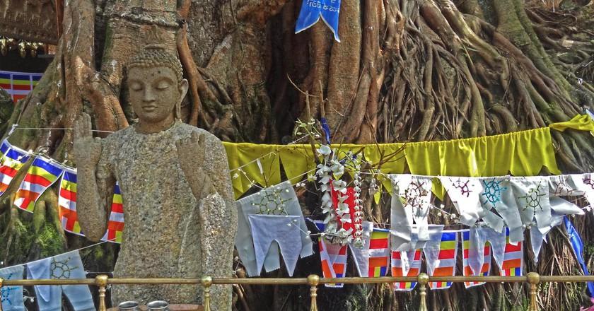 A typical Sri Lankan Boddhi  Tree | © Rajeev Rajagopalan / Flickr