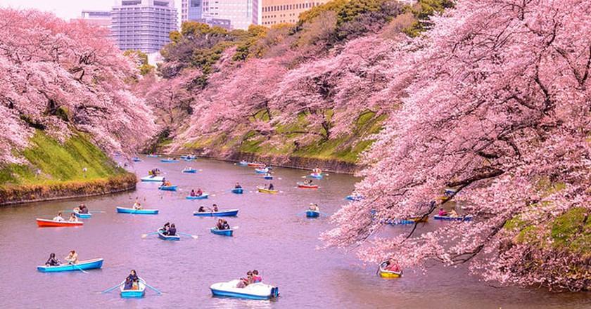Sakura│© Yoshikazu TAKADA / flickr