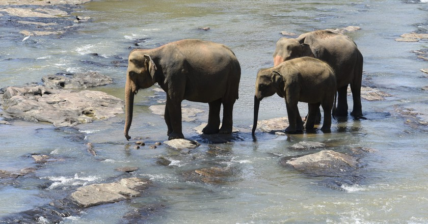 Sri Lankan elephants cooling off   ©Ted Drake / Flickr