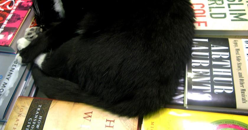 Bookish Cat   © Kari Sullivan/Flickr
