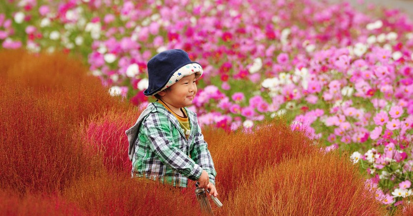 7 Flower Festivals That Are Worth Travelling to Japan For