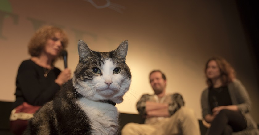 CineMeow is the Purr-fect Event for Cat Lovers and Cinephiles in the Netherlands
